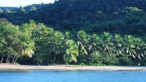 Rhum_Coco_Guadeloupe_ (9)